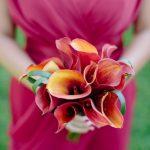 ดอกคาลล่าลิลลี่